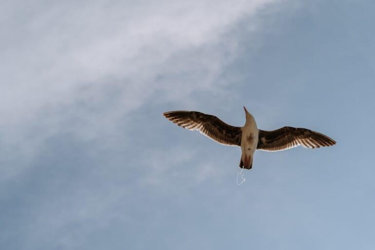 flying bird2